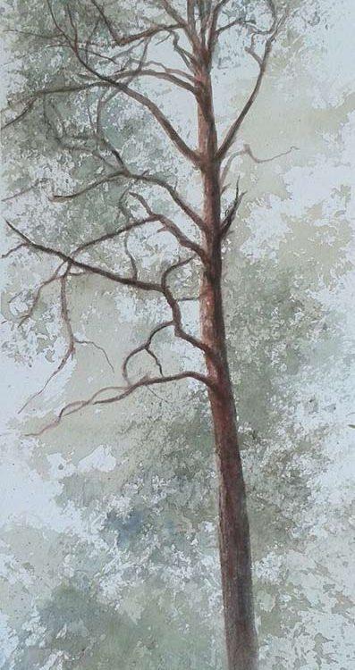 acuarela-juan-ramon-avalos-estudio-de-un-pino