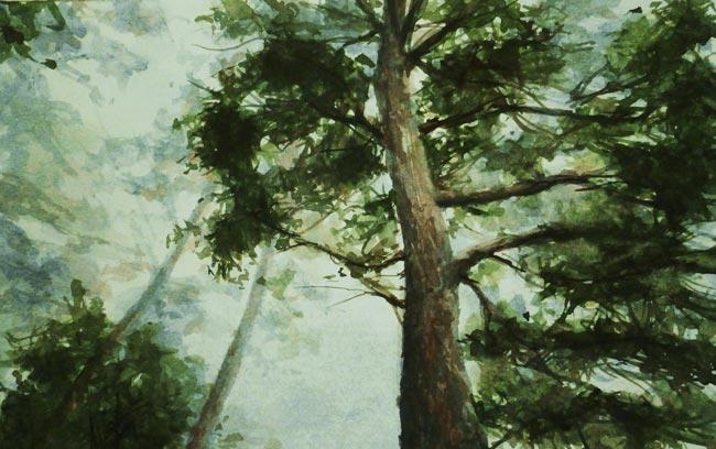 El Despertar del Bosque. Juan Ramón Ávalos. Acuarela